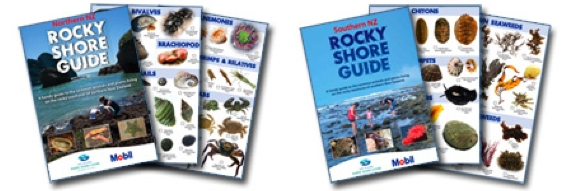Seashore ID Guides and Activity Books